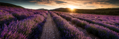 FIRST RAY ON THE LAVENDER FIELD - Schöne Landschaft Bilder kaufen | Stimmungs Foto als Fineart by Stefan Somogyi Fotografie