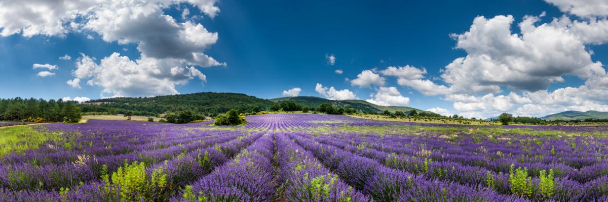 LA LARGEUR DEL LA LAVANDE - Schöne Landschaft Bilder kaufen | Stimmungs Foto als Fineart by Stefan Somogyi Fotografie