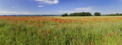 MOHNFELD - Schöne Landschaft Bilder kaufen | Stimmungs Foto als Fineart by Stefan Somogyi Fotografie
