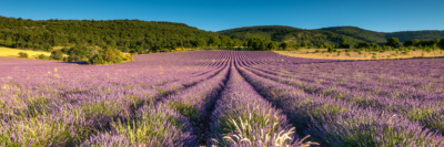 MORNING LIGHT ON THE LAVENDER - Schöne Landschaft Bilder kaufen | Stimmungs Foto als Fineart by Stefan Somogyi Fotografie