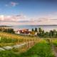 REBEN AM SEE - Schöne Landschaft Bilder kaufen | Stimmungs Foto als Fineart by Stefan Somogyi Fotografie