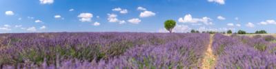 THE LONLY TREE – VALENSOLE - Schöne Landschaft Bilder kaufen | Stimmungs Foto als Fineart by Stefan Somogyi Fotografie