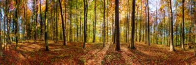 BUCHENWALD - Schöne Landschaft Bilder kaufen | Stimmungs Foto als Fineart by Stefan Somogyi Fotografie