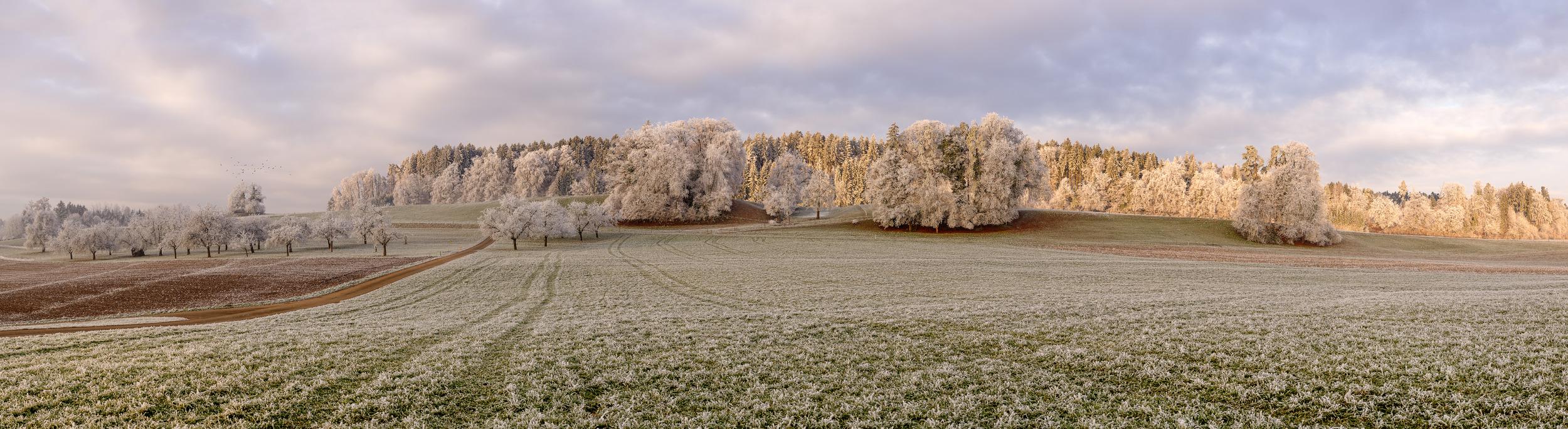 FROSTIGER MORGEN - Schöne Landschaft Bilder kaufen | Stimmungs Foto als Fineart by Stefan Somogyi Fotografie