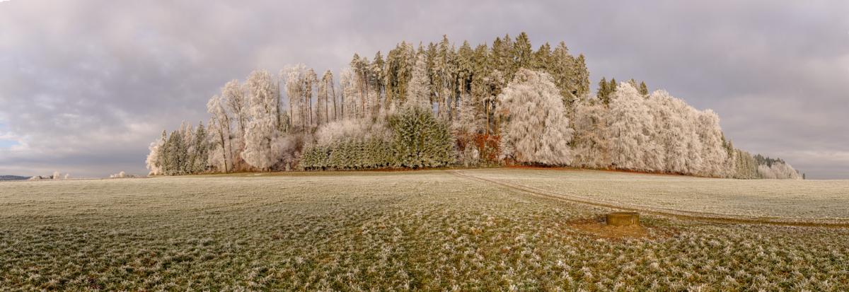 FROSTIGER WALD - Schöne Landschaft Bilder kaufen   Stimmungs Foto als Fineart by Stefan Somogyi Fotografie