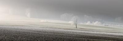 FROZEN TREE - Schöne Landschaft Bilder kaufen | Stimmungs Foto als Fineart by Stefan Somogyi Fotografie