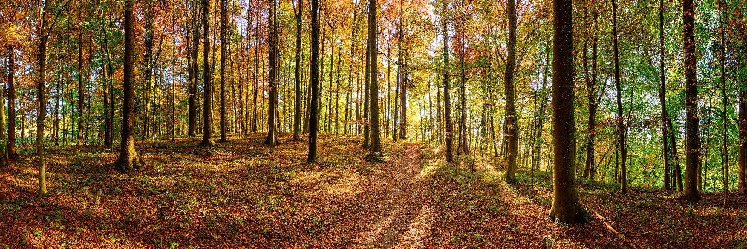 HERBSTWALD - Schöne Landschaft Bilder kaufen | Stimmungs Foto als Fineart by Stefan Somogyi Fotografie