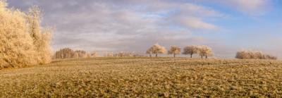 OBSTBÄUME IM FROST - Schöne Landschaft Bilder kaufen | Stimmungs Foto als Fineart by Stefan Somogyi Fotografie