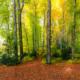 OTTOBERGER BUCHENWALD - Schöne Landschaft Bilder kaufen | Stimmungs Foto als Fineart by Stefan Somogyi Fotografie