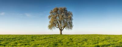 STANDING LONELY - Schöne Landschaft Bilder kaufen | Stimmungs Foto als Fineart by Stefan Somogyi Fotografie