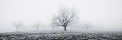 TREES IN THE MIST - Schöne Landschaft Bilder kaufen | Stimmungs Foto als Fineart by Stefan Somogyi Fotografie