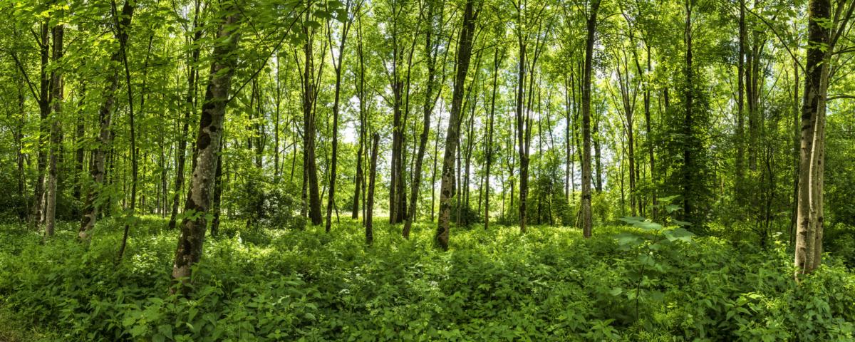 THURGAUER ZAUBERWALD I - Schöne Landschaft Bilder kaufen | Stimmungs Foto als Fineart by Stefan Somogyi Fotografie
