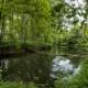 THURGAUER ZAUBERWALD II - Schöne Landschaft Bilder kaufen | Stimmungs Foto als Fineart by Stefan Somogyi Fotografie