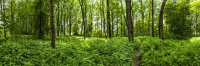 THURGAUER ZAUBERWALD III - Schöne Landschaft Bilder kaufen | Stimmungs Foto als Fineart by Stefan Somogyi Fotografie