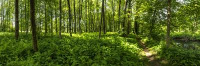 THURGAUER ZAUBERWALD IV - Schöne Landschaft Bilder kaufen | Stimmungs Foto als Fineart by Stefan Somogyi Fotografie