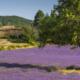 IDYLLE DE PROVENCE - Schöne Landschaft Bilder kaufen | Stimmungs Foto als Fineart by Stefan Somogyi Fotografie