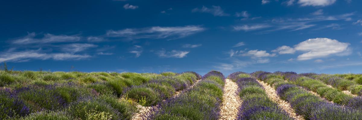 INFINITY LAVENDER - Schöne Landschaft Bilder kaufen | Stimmungs Foto als Fineart by Stefan Somogyi Fotografie