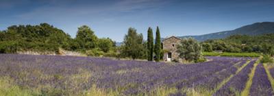 LAVANDE DU LUBERON - Schöne Landschaft Bilder kaufen | Stimmungs Foto als Fineart by Stefan Somogyi Fotografie